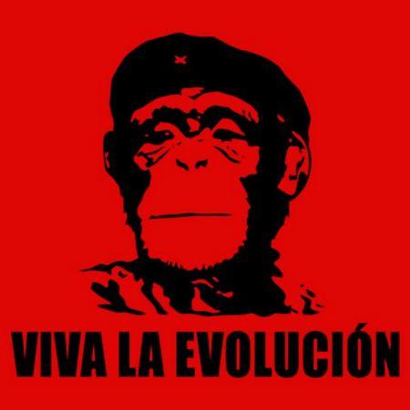 viva-evolution